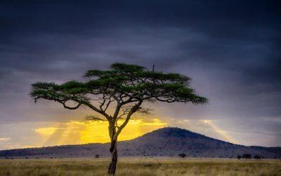 Data-Driven Development in Africa