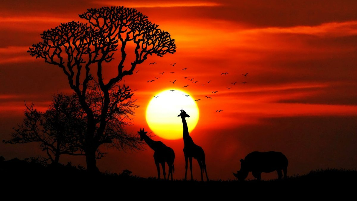 Sunset over African animals